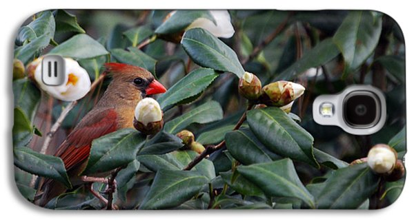 Photos Of Birds Galaxy S4 Cases - Momma Cardinal Galaxy S4 Case by Skip Willits