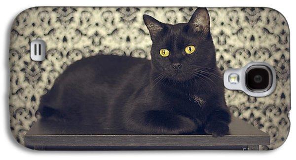 Black Photographs Galaxy S4 Cases - Mongo The Robust Cat Galaxy S4 Case by Jennifer Ramirez