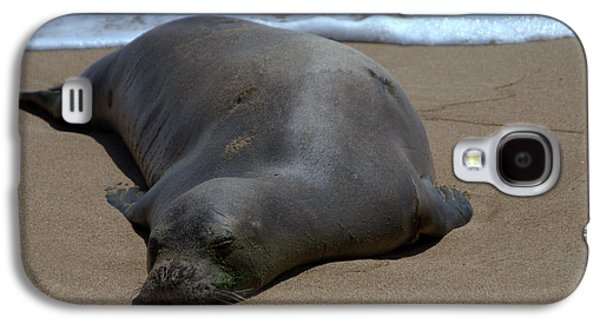 Ocean Mammals Galaxy S4 Cases - Monk Seal Sunning Galaxy S4 Case by Brian Harig