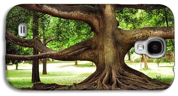 Tree Roots Galaxy S4 Cases - Monster Tree. Old Fig Tree in Peradeniya Garden. Sri Lanka Galaxy S4 Case by Jenny Rainbow
