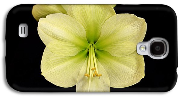 Indiana Flowers Galaxy S4 Cases - Moonlight Amaryllis Galaxy S4 Case by Sandy Keeton