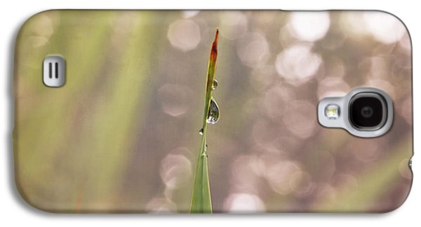 Designers Choice Photographs Galaxy S4 Cases - Morning Dew on a Grass Galaxy S4 Case by Angela A Stanton