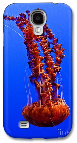 Pch Galaxy S4 Cases - Monterey Bay Aquarium 1 Galaxy S4 Case by Micah May
