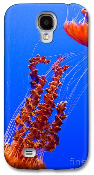 Pch Galaxy S4 Cases - Monterey Bay Aquarium 3 Galaxy S4 Case by Micah May