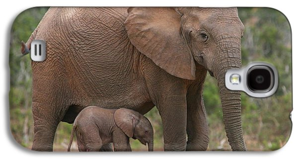 Nature Photographs Galaxy S4 Cases - Mother and Calf Galaxy S4 Case by Bruce J Robinson