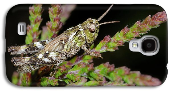 Mottled Grasshopper Juvenile Galaxy S4 Case by Nigel Downer