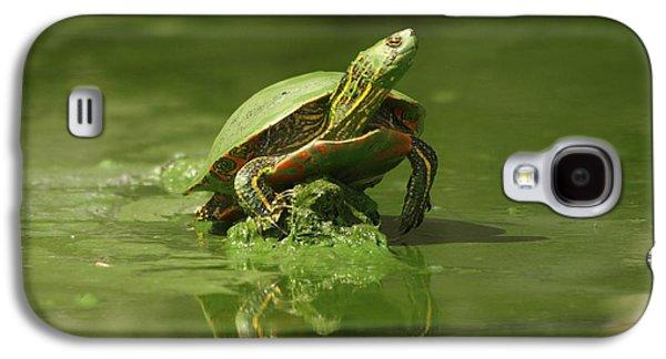 Alga Galaxy S4 Cases - Mud Turtle Galaxy S4 Case by James Peterson