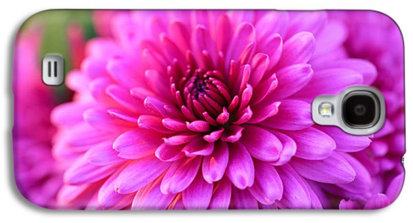 Pinks And Purple Petals Photographs Galaxy S4 Cases - Mums the Word Galaxy S4 Case by Rachel Cohen