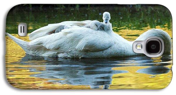 Mute Swan And Cygnets Galaxy S4 Case by Alex Hyde