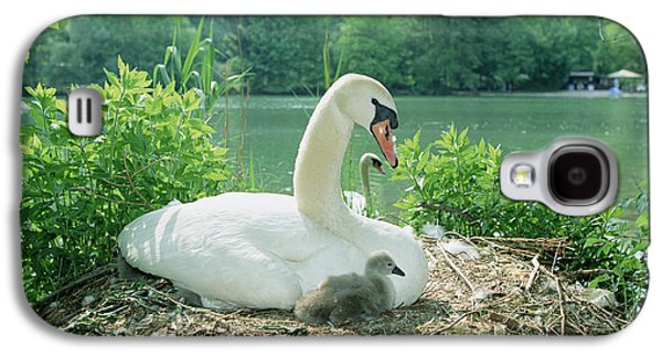 Three Chicks Galaxy S4 Cases - Mute Swan Parent And Chicks On Nest Galaxy S4 Case by Konrad Wothe
