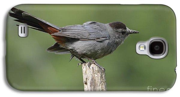 Garden Scene Galaxy S4 Cases - My Catbird Galaxy S4 Case by Randy Bodkins