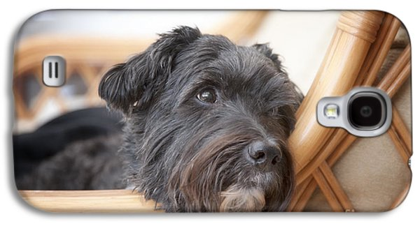 Dogs Digital Galaxy S4 Cases - My Loyal Friend Galaxy S4 Case by Natalie Kinnear