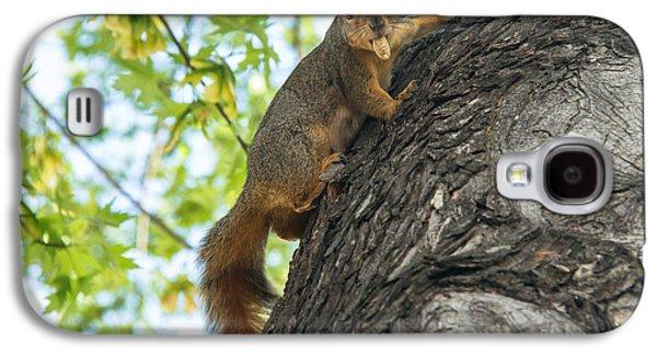 Fox Squirrel Galaxy S4 Cases - My Peanut Galaxy S4 Case by Robert Bales