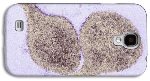 Mycoplasma Genitalium Bacteria Galaxy S4 Case by Thomas Deerinck, Ncmir