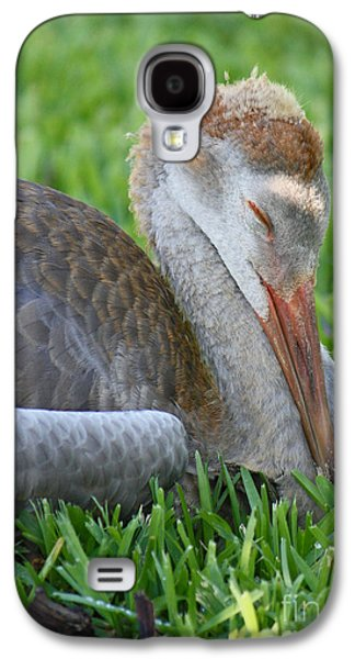 Young Birds Galaxy S4 Cases - Napping Sandhill Baby Galaxy S4 Case by Carol Groenen