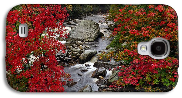 Beauty Mark Photographs Galaxy S4 Cases - Natures Frame Galaxy S4 Case by Mark Papke