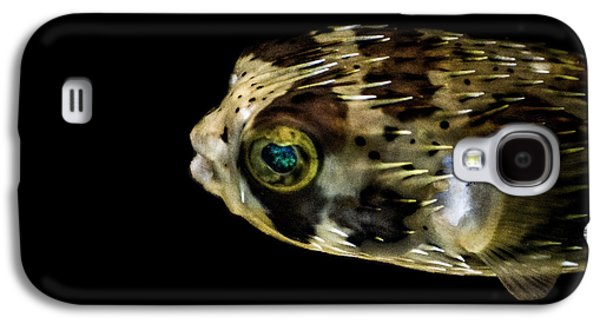 Porcupine Fish Galaxy S4 Cases - Naturescape 52 b Galaxy S4 Case by  Otri  Park