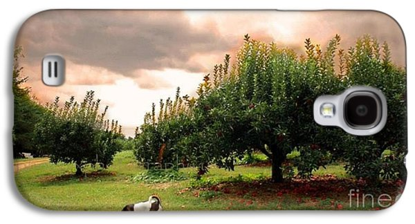 John Adams Galaxy S4 Cases - NC Orchard Galaxy S4 Case by John Adams