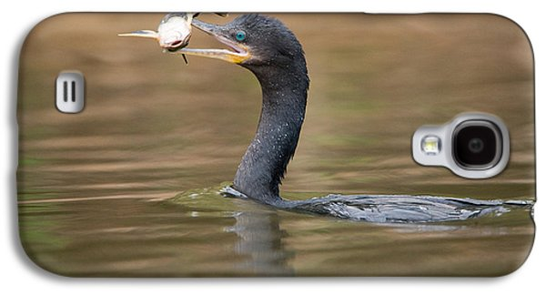 Wetlands Galaxy S4 Cases - Neotropic Cormorant Phalacrocorax Galaxy S4 Case by Panoramic Images