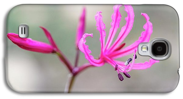 Nerine Humilis Flower Galaxy S4 Case by Peter Chadwick