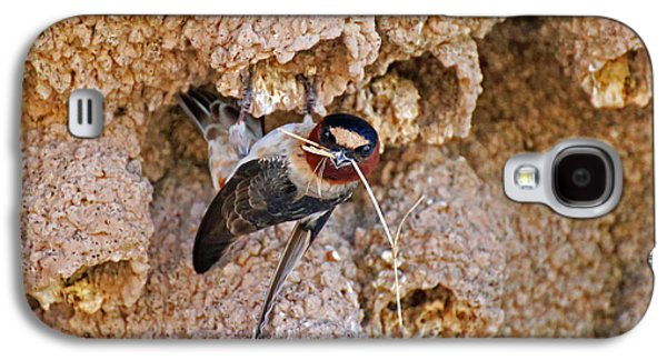 Mud Nest Galaxy S4 Cases - Nesting Cliff Swallow Galaxy S4 Case by Renee Owens