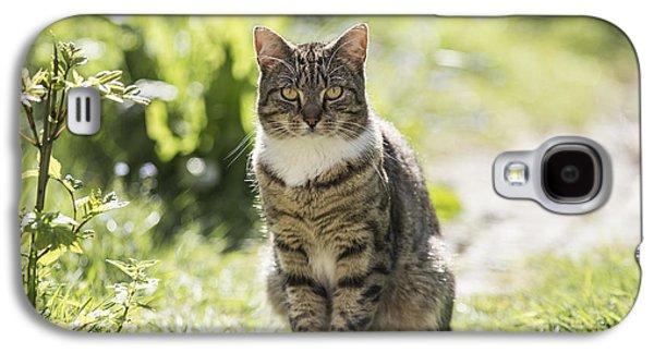 Cats Pyrography Galaxy S4 Cases - Next Doors Tabby Galaxy S4 Case by John Richardson