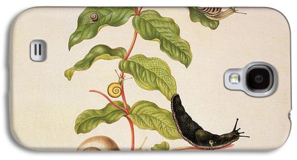 Flora Drawings Galaxy S4 Cases - Hypericum Baxiforum Galaxy S4 Case by Maria Sibylla Graff Merian