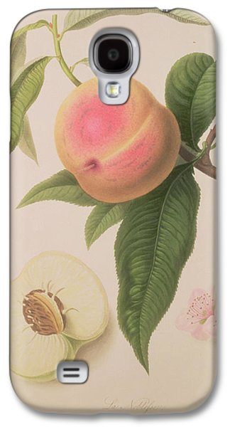 Fruit Tree Galaxy S4 Cases - Noblesse Peach Galaxy S4 Case by William Hooker
