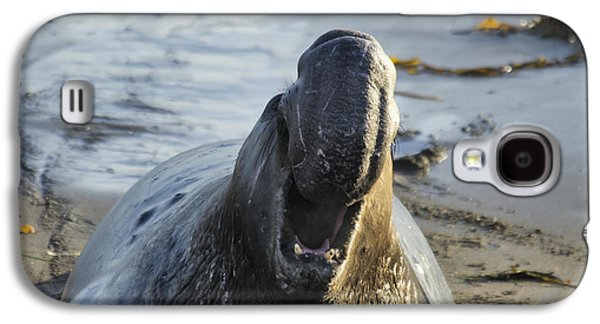 Elephant Seals Galaxy S4 Cases - Northern Elephant Seal Mirounga Galaxy S4 Case by Mark Newman
