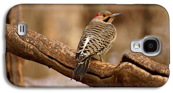 Evansville Galaxy S4 Cases - Northern Flicker II Galaxy S4 Case by Sandy Keeton