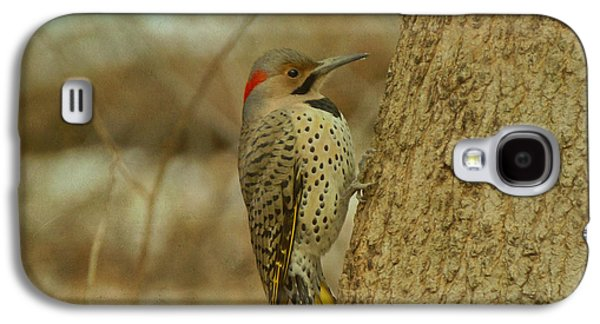 Evansville Galaxy S4 Cases - Northern Flicker on Tree Galaxy S4 Case by Sandy Keeton