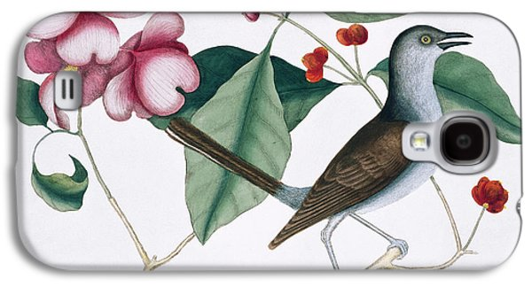 Northern Mockingbird Galaxy S4 Case by Natural History Museum, London