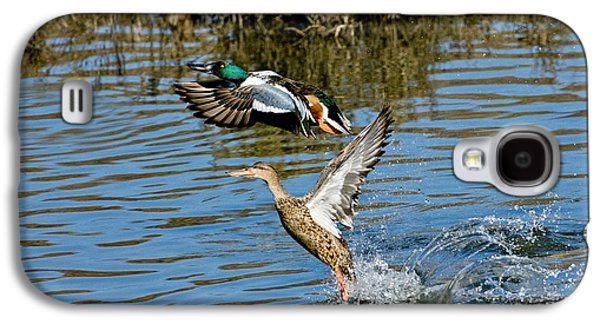 Two Ducks In Flight Photographs Galaxy S4 Cases - Northern Shoveler Pair Galaxy S4 Case by Anthony Mercieca