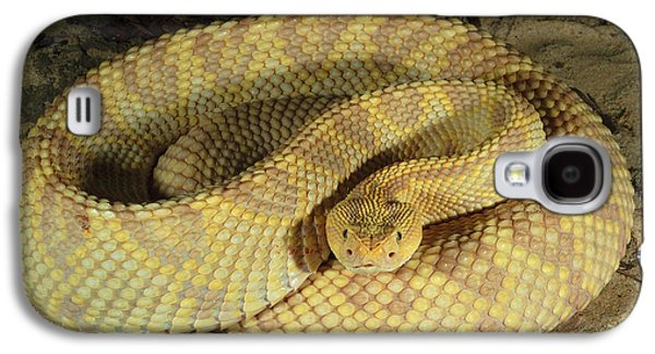 Morph Galaxy S4 Cases - Northwestern Neotropical Rattlesnake Galaxy S4 Case by Gregory G. Dimijian