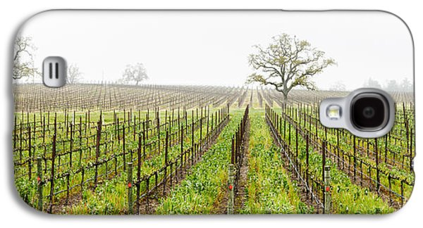 Sonoma County Vineyards. Galaxy S4 Cases - Oak Trees In A Vineyard, Guerneville Galaxy S4 Case by Panoramic Images