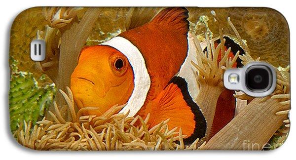 Demoiselles Galaxy S4 Cases - Ocellaris Clown Fish No 1 Galaxy S4 Case by Jerry Fornarotto
