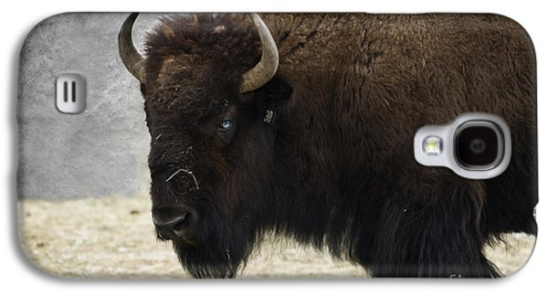 American Bison Galaxy S4 Cases - Ol Blue Eyes Galaxy S4 Case by Juli Scalzi
