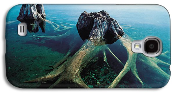River View Galaxy S4 Cases - Old Tree Trunks Underwater Galaxy S4 Case by Panoramic Images