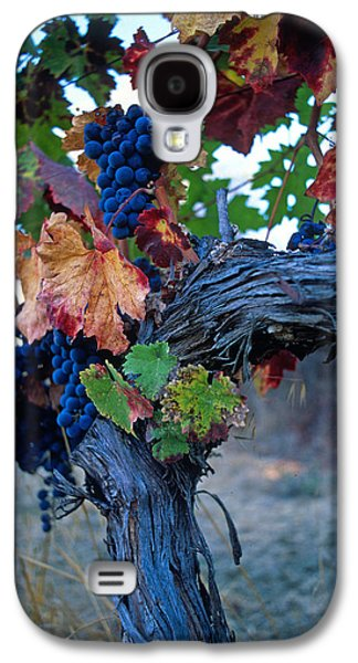 Canvas Wine Prints Galaxy S4 Cases - Old Vine Galaxy S4 Case by Kathy Yates