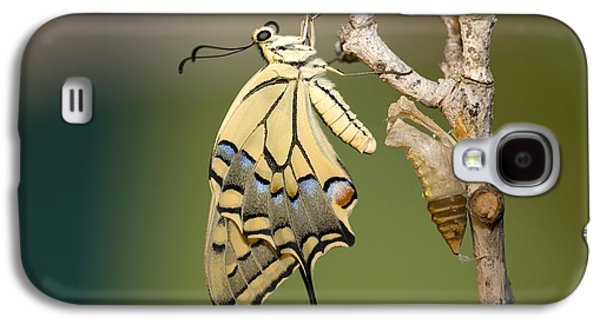 Cocoon Galaxy S4 Cases - Old World Swallowtail Papilio machaon Galaxy S4 Case by Eyal Bartov