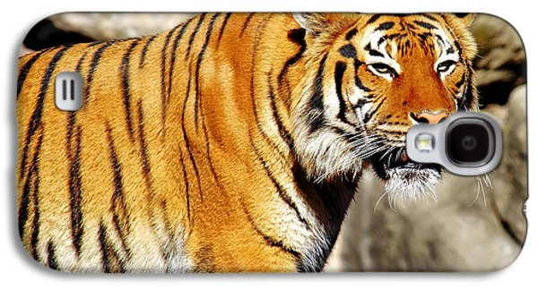 The Tiger Hunt Galaxy S4 Cases - On the Prowl Galaxy S4 Case by Jason Politte