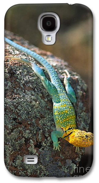 Wildlife Refuge. Galaxy S4 Cases - On the Rocks Galaxy S4 Case by Inge Johnsson