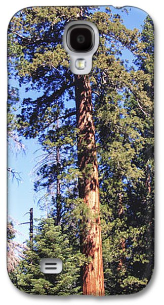 Tree Roots Galaxy S4 Cases - One Giant Sequoia Galaxy S4 Case by Barbara Snyder