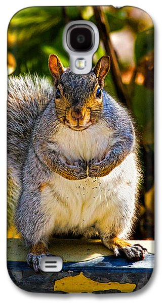 Man Cave Photographs Galaxy S4 Cases - One Gray Squirrel Galaxy S4 Case by Bob Orsillo