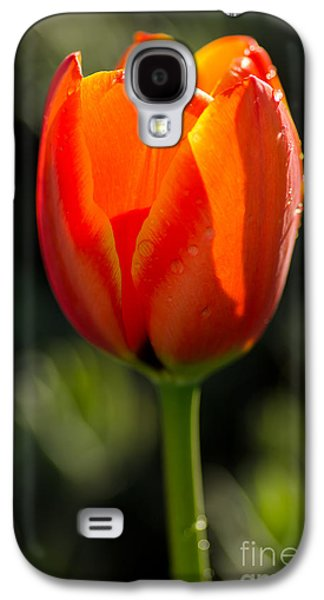 Bloosom Galaxy S4 Cases - Only For You Galaxy S4 Case by Nick  Boren