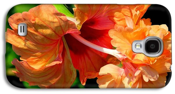 Flowers Photographs Galaxy S4 Cases - Orange hibiscus II Galaxy S4 Case by Zina Stromberg