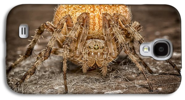 Creepy Galaxy S4 Cases - Orange Marbled Orb Weaver Galaxy S4 Case by Adam Romanowicz