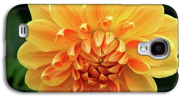 Bloosom Galaxy S4 Cases - Orange Sun Galaxy S4 Case by Christiane Schulze Art And Photography