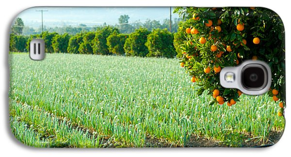 Oranges On A Tree With Onions Crop Galaxy S4 Case by Panoramic Images