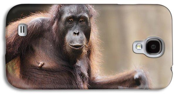 Orangutan Galaxy S4 Case by Richard Garvey-Williams